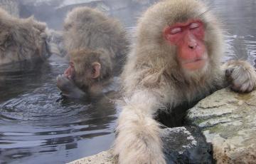 申年・動物・猿