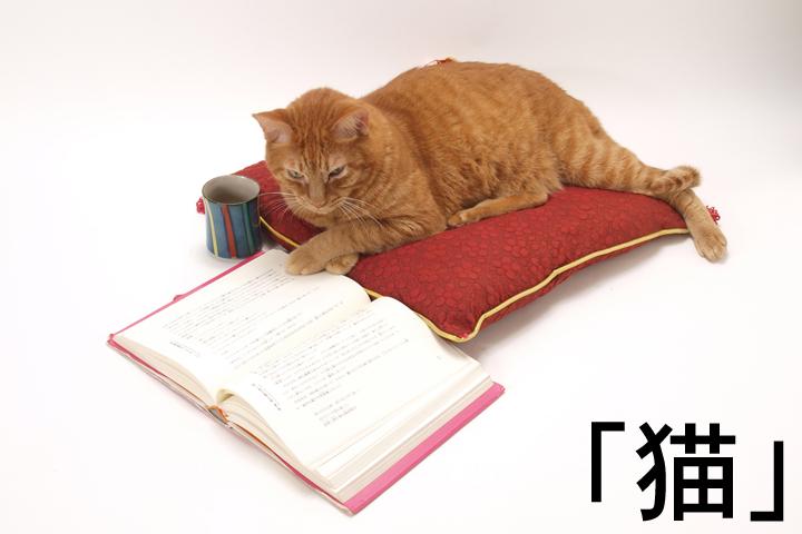 猫、キャット、動物